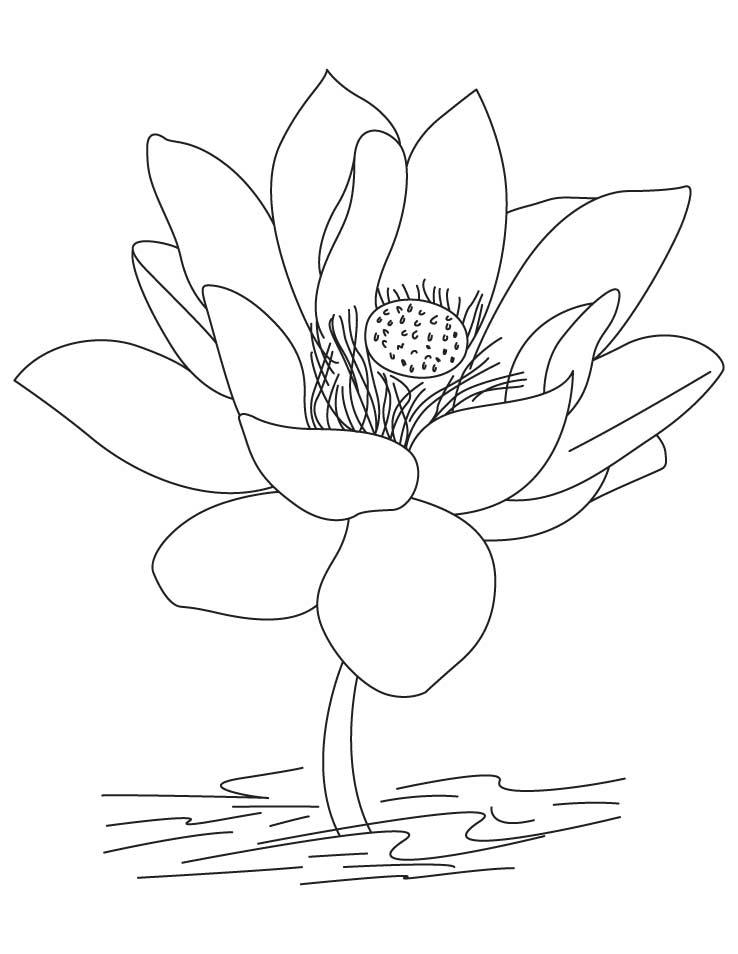 lotus flower coloring page lotus flower coloring page letmecolor flower coloring lotus page
