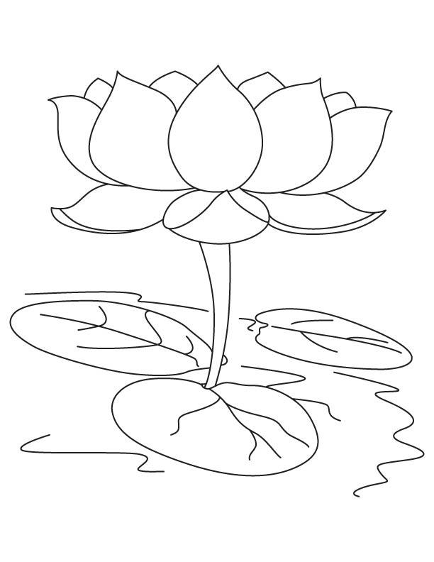 lotus flower coloring page lotus flower growing coloring page kids play color flower coloring lotus page