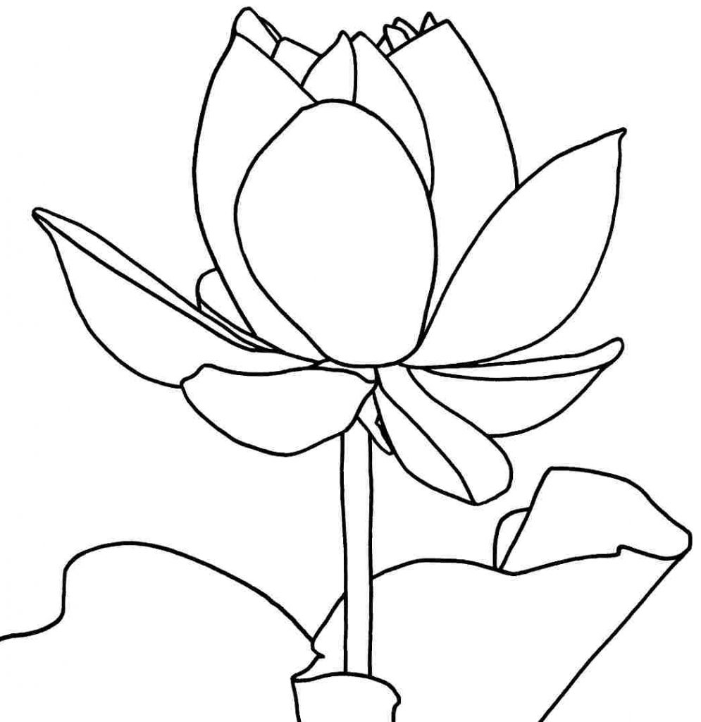 lotus flower coloring page lotus outline drawing at getdrawingscom free for coloring page lotus flower