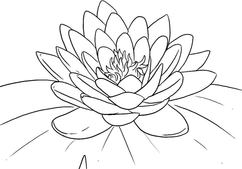 lotus flower coloring page may 2013 flower coloring page coloring lotus flower page