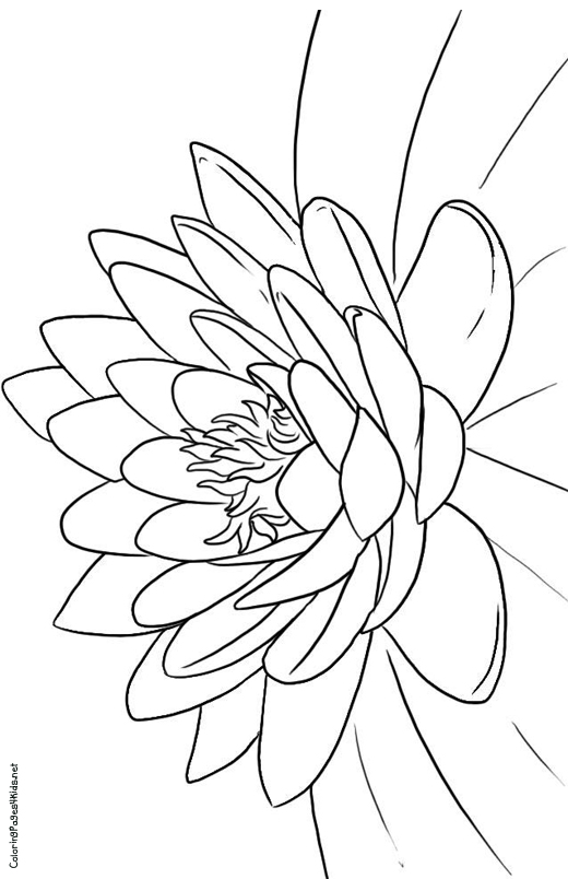 lotus flower coloring page printable coloring pages lotus flowers coloring home flower lotus page coloring