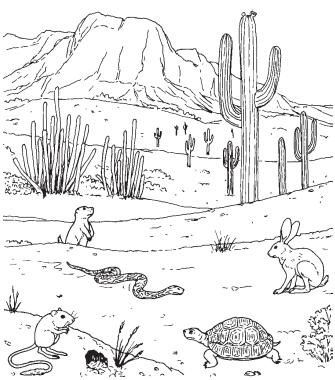 pictures of animals in desert animal coloring pages da dh enchantedlearningcom animals desert in of pictures