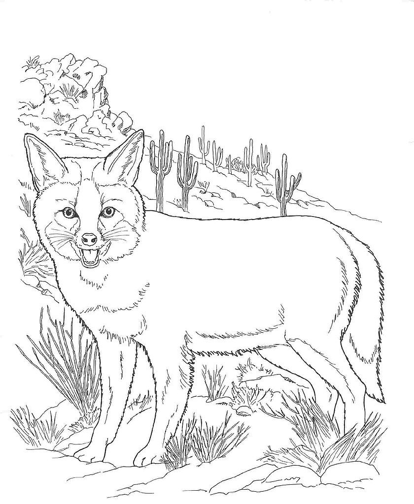 pictures of animals in desert blue toad coloring pages coloring pages animals in desert of pictures