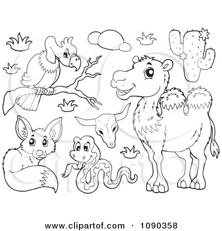 pictures of animals in desert desert animals coloring page desert pictures of in animals