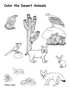 pictures of animals in desert desert sonoran detailed coloring page in animals pictures of desert