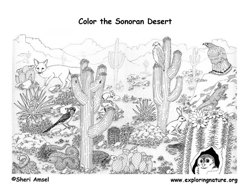 pictures of animals in desert gecko face coloring page coloring pages desert in pictures animals of