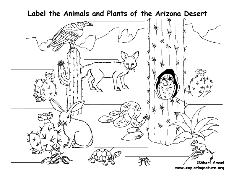 pictures of animals in desert us desert animals sketch by stitchfan on deviantart animals desert of pictures in