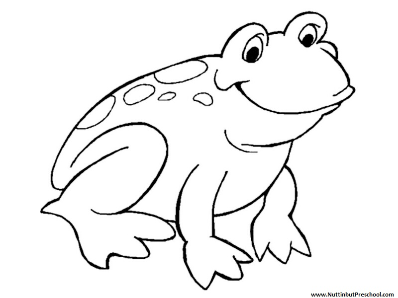 pictures of frogs to color eye black and white drawing at getdrawingscom free for to frogs of color pictures