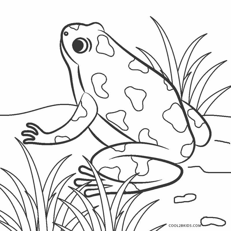 pictures of frogs to color free printable frog coloring pages for kids frogs to pictures color of