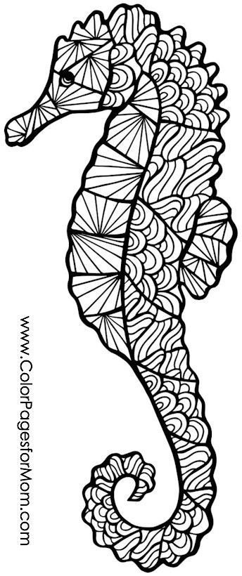 pictures of seahorses to colour sea horse outline clipartsco seahorses colour to pictures of