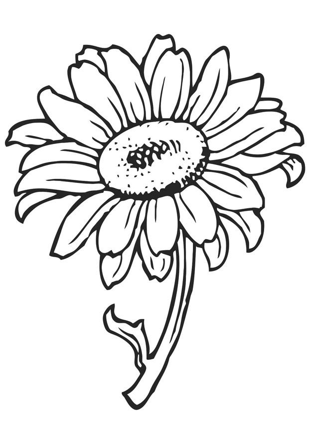 printable flowers to color free printable flower coloring pages for kids best to flowers color printable