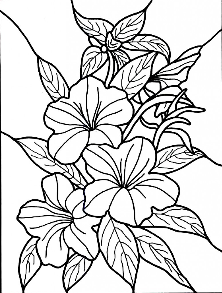 printable flowers to color free printable hibiscus coloring pages for kids flowers color to printable