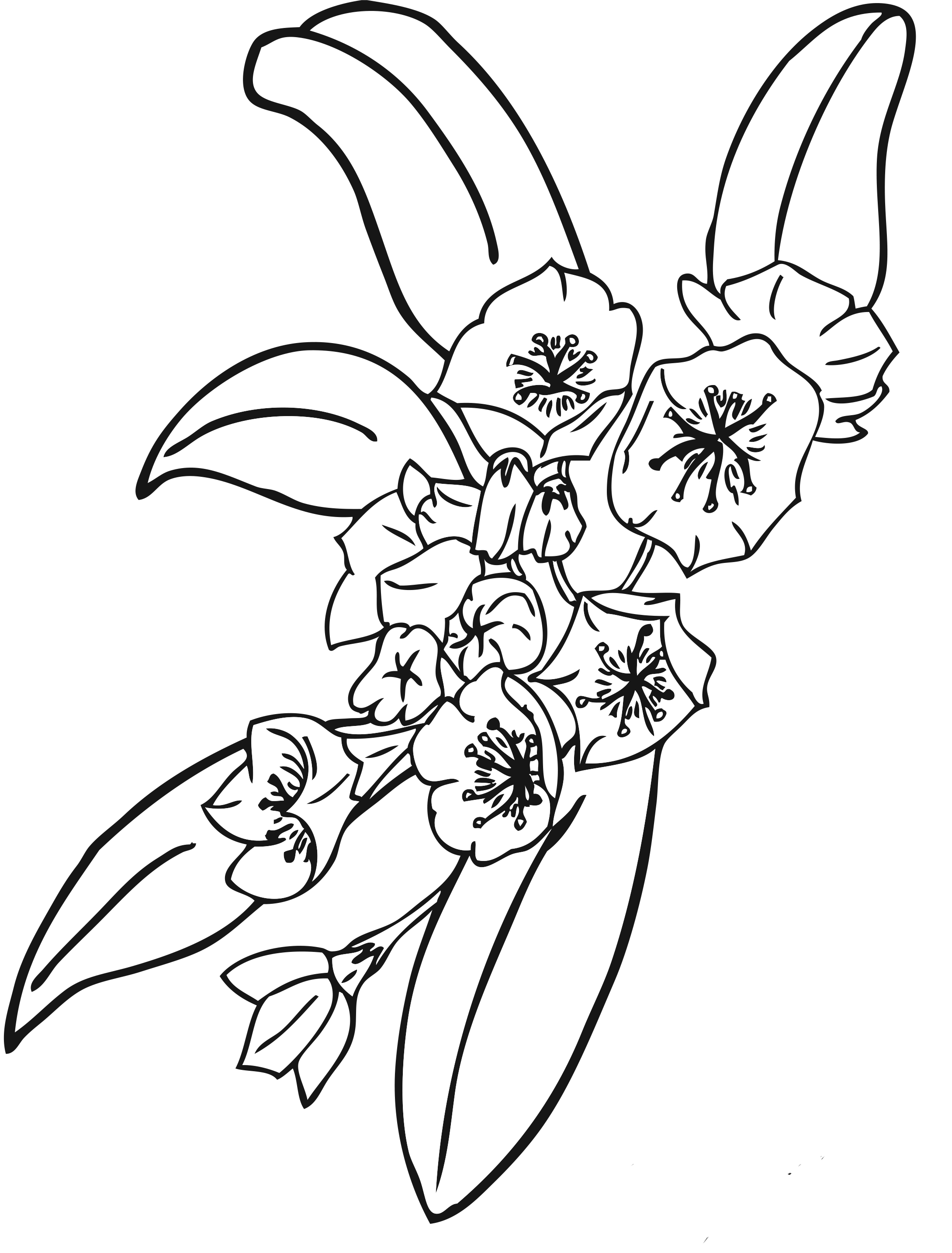printable flowers to color summer flowers printable coloring pages free large images printable to flowers color