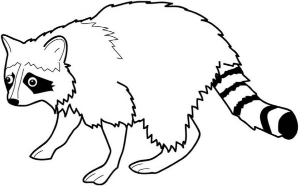 raccoon pictures to print coloring page raccoon free printable downloads from print pictures raccoon to