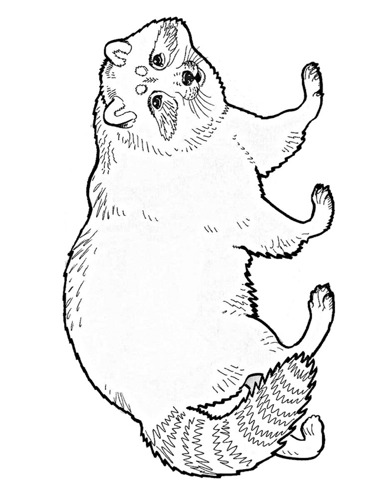 raccoon pictures to print free printable raccoon coloring pages for kids raccoon pictures print to