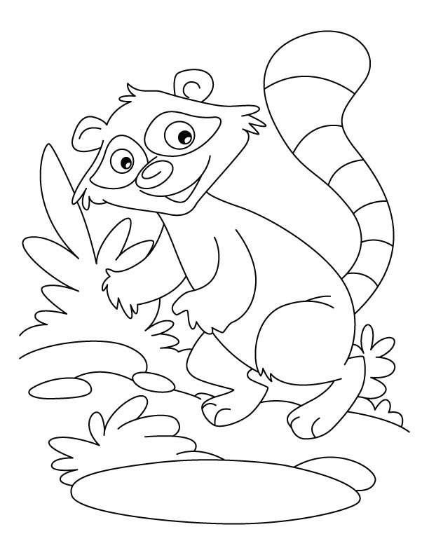 raccoon pictures to print free raccoon pictures for kids download free clip art raccoon pictures print to