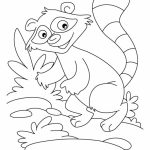 raccoon pictures to print raccoon coloring pages getcoloringpagescom to raccoon print pictures