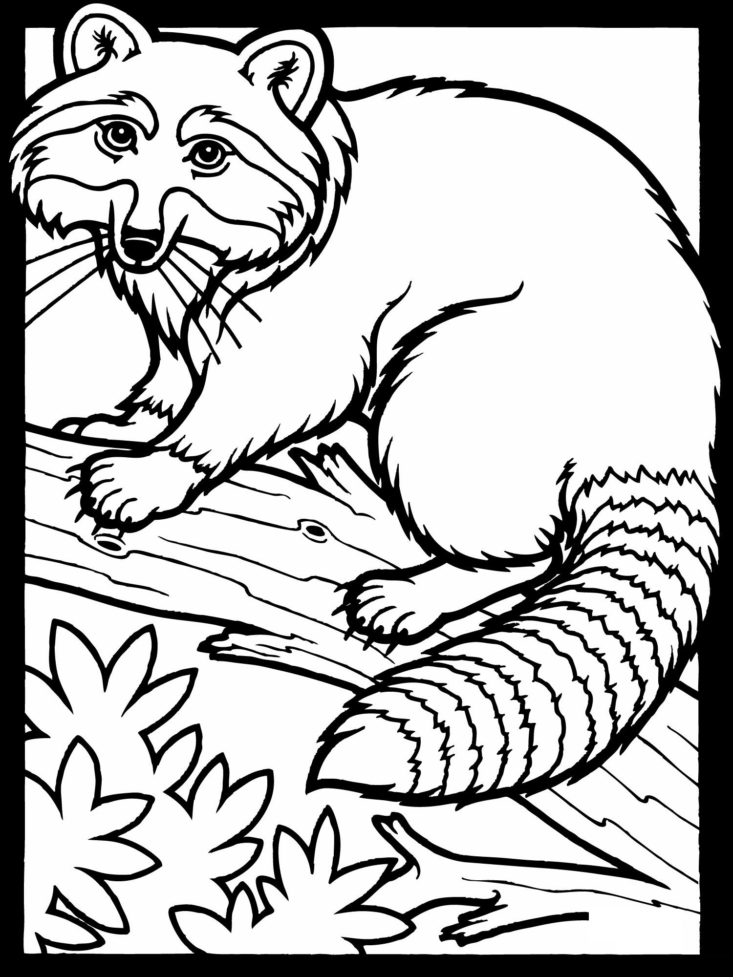 raccoon pictures to print raccoon coloring pages kidsuki print raccoon pictures to