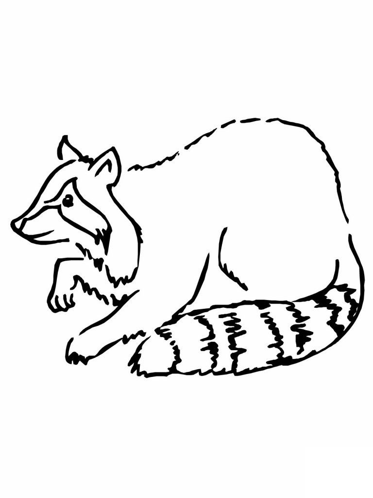 raccoon pictures to print raccoon outline coloring pages to raccoon print pictures