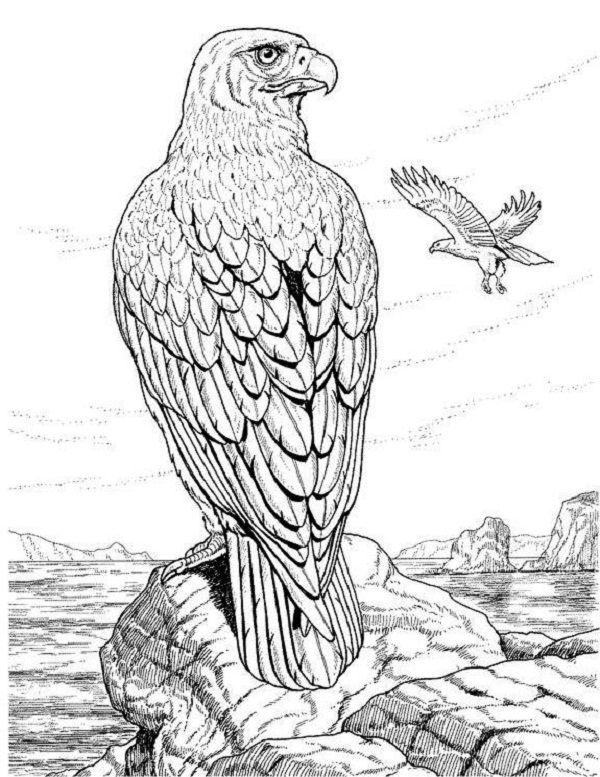 realistic animal coloring pages realistic human face coloring pages coloring pages realistic animal coloring pages