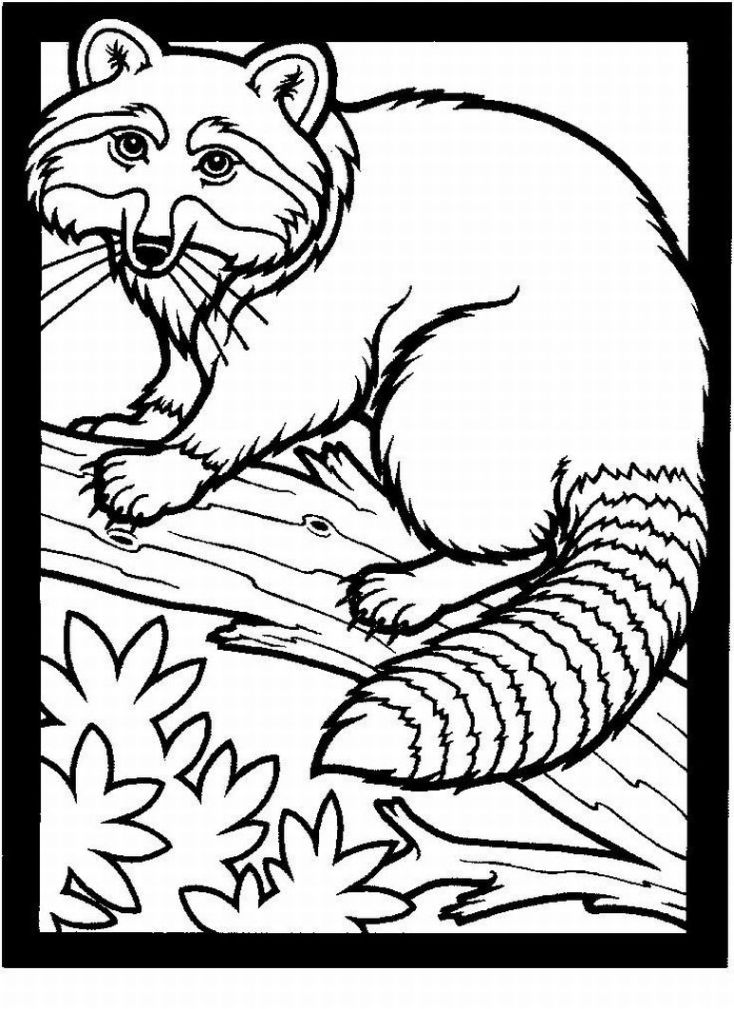 realistic animal coloring pages realisticanimalcoloringpages1lrgjpg thebooks animal pages realistic coloring