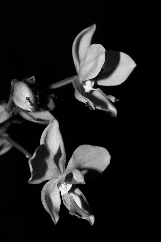 uncoloured pictures of flowers bandung documentary photo uncolored flower flowers pictures uncoloured of