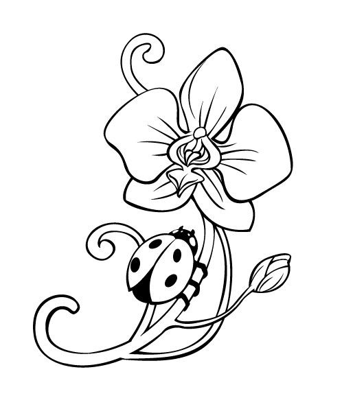 uncoloured pictures of flowers uncolored stock photos royalty free images vectors uncoloured of pictures flowers
