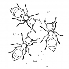 a for ant coloring pages ant coloring pages getcoloringpagescom a pages for coloring ant