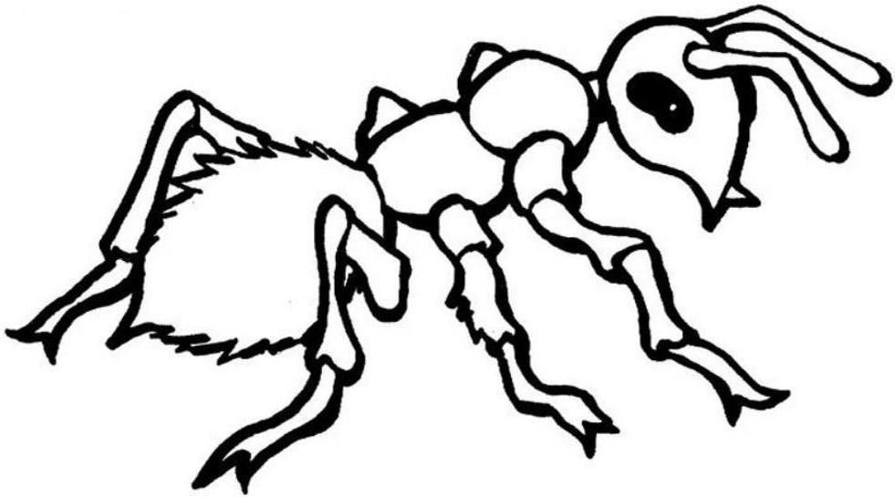 a for ant coloring pages smiling ant coloring page free printable coloring pages pages for coloring a ant