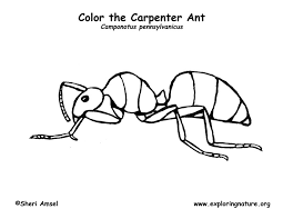 a for ant coloring pages top 25 free printable ants coloring pages online coloring for a pages ant