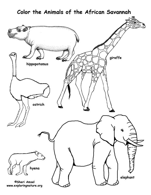 african animals coloring pages to print savanna african animals coloring page to coloring print animals pages african