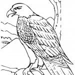 aguila arpia para colorear colorear un águila aguila para colorear arpia