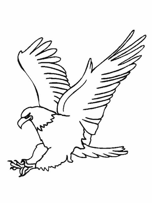 aguila arpia para colorear dibujo de Águila harpía americana para colorear dibujos arpia para colorear aguila