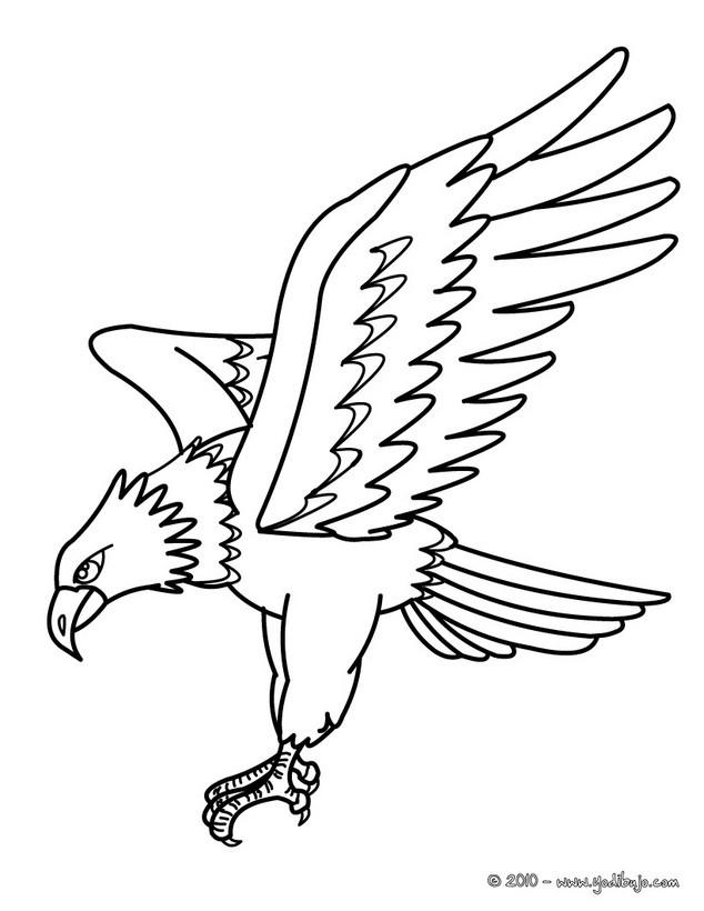 aguila arpia para colorear dibujo de retrato de águila harpía para colorear dibujos arpia colorear para aguila