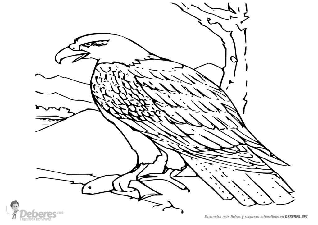 aguila arpia para colorear pinto dibujos águila para colorear arpia aguila para colorear