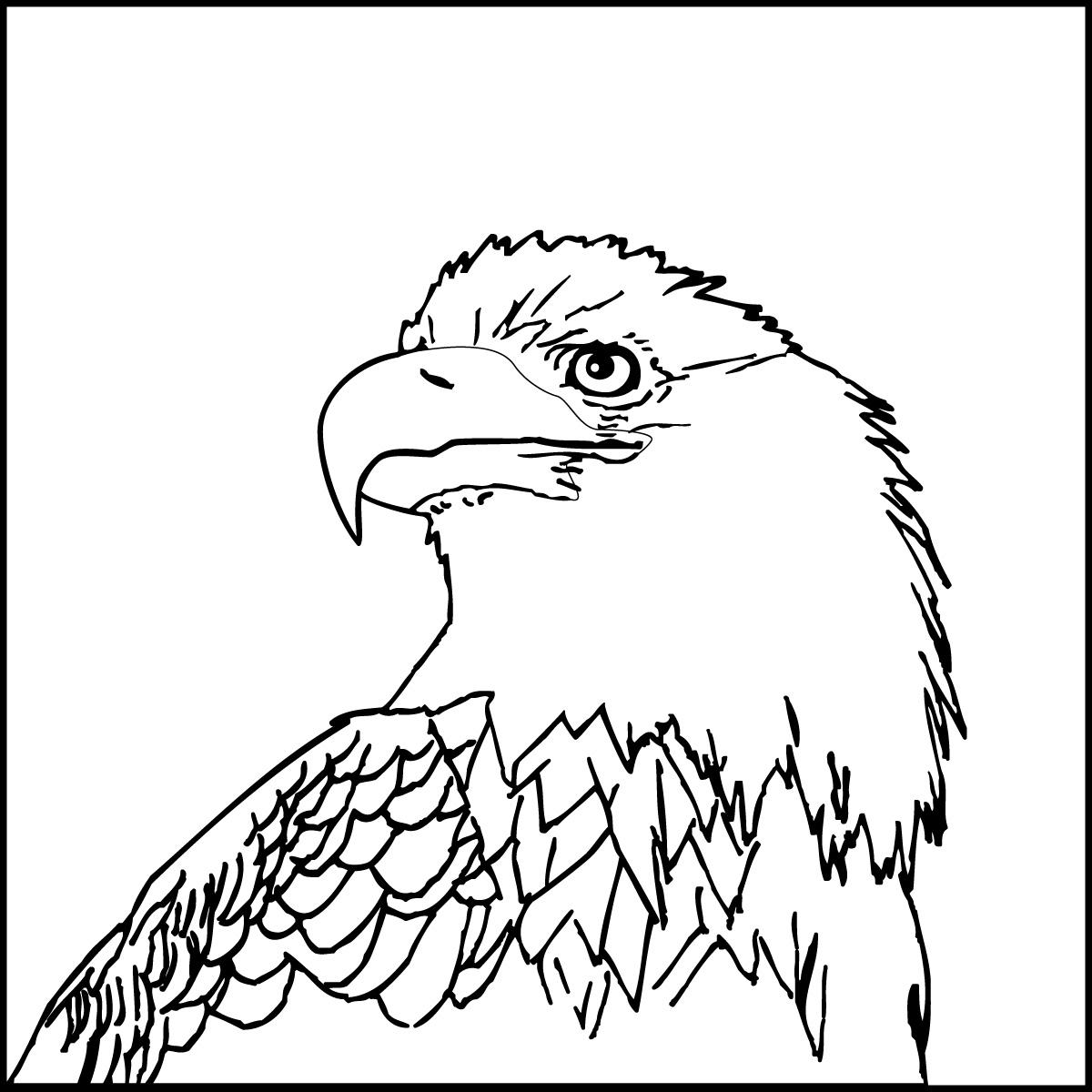 american eagle coloring sheet american eagle coloring page free eagle coloring pages coloring american sheet eagle