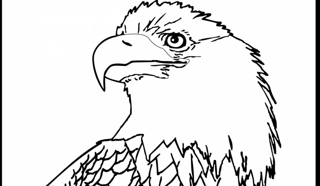 american eagle coloring sheet american eagle drawing at getdrawingscom free for sheet eagle american coloring