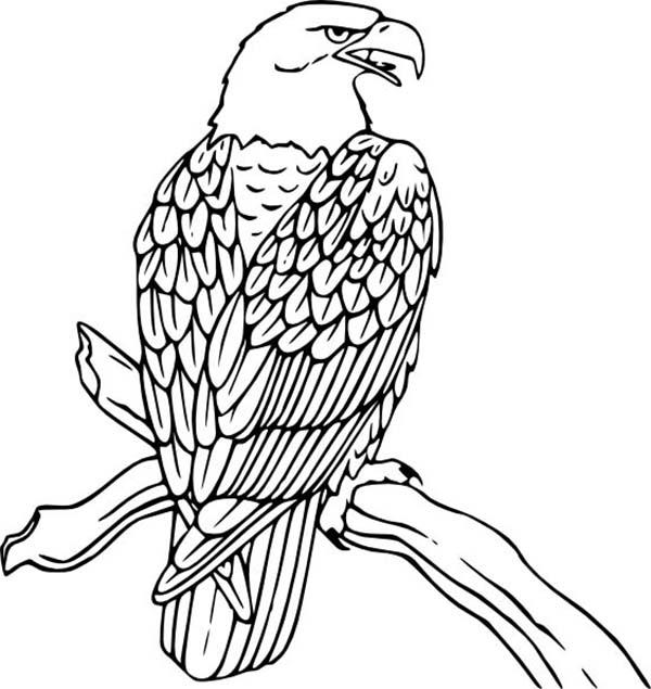 american eagle coloring sheet animal coloring pages coloring pages coloring eagle american sheet