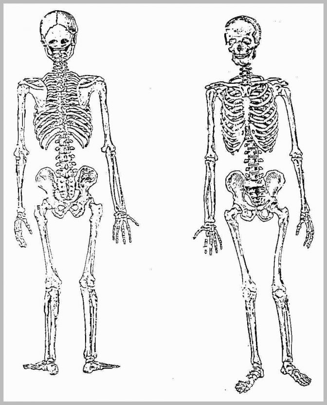 anatomy coloring book chapter 13 answers cat in the hat coloring pages skull coloring pages 13 chapter book answers coloring anatomy