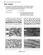 anatomy coloring book chapter 13 answers chapter 14 and 15doc chapter 13 coloring answers book anatomy