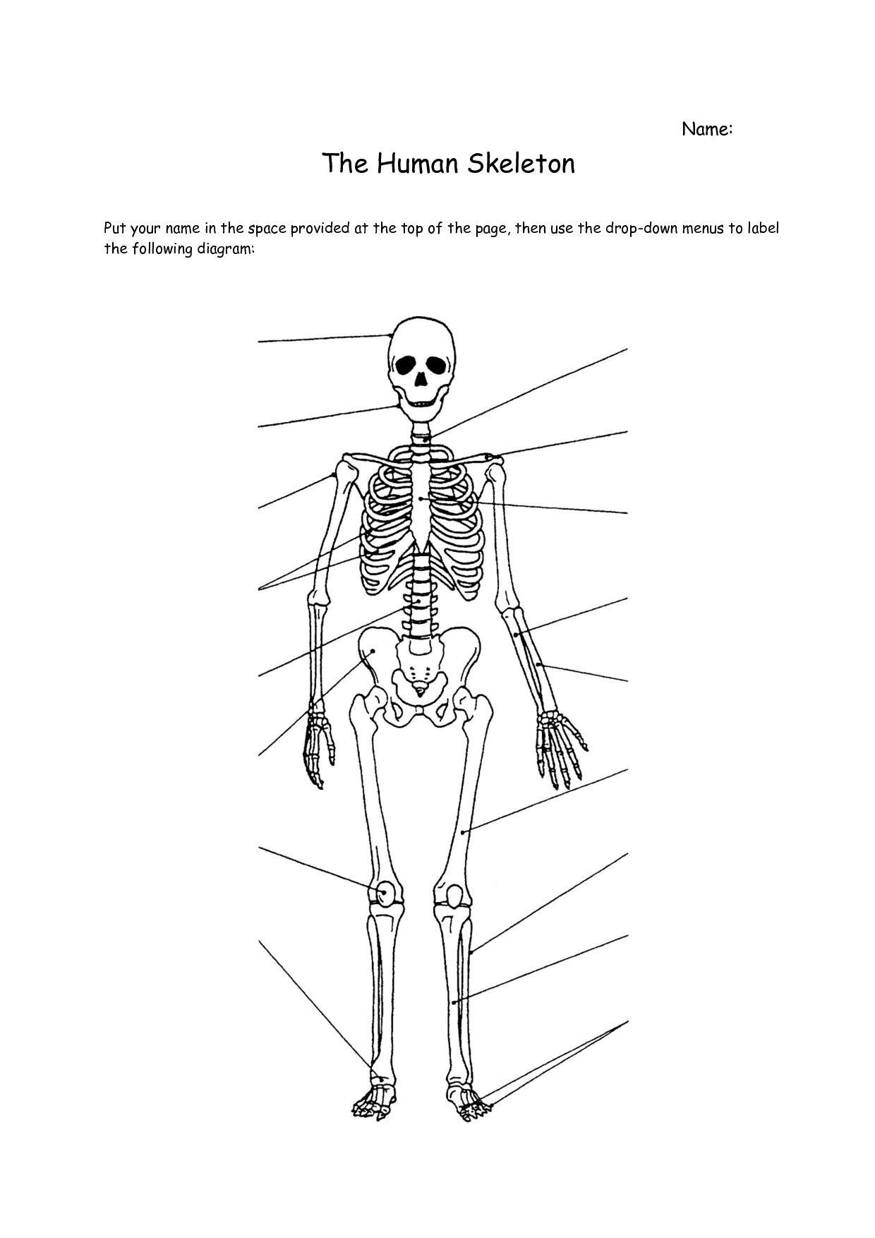 anatomy coloring book chapter 13 answers skeletalsystemevidencesheetanswerkey 3 0 anatomy 8 anatomy chapter book 13 answers coloring