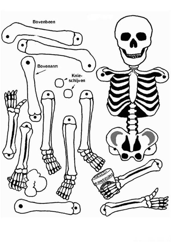 anatomy coloring page digestive system coloring page human body systems brain page anatomy coloring