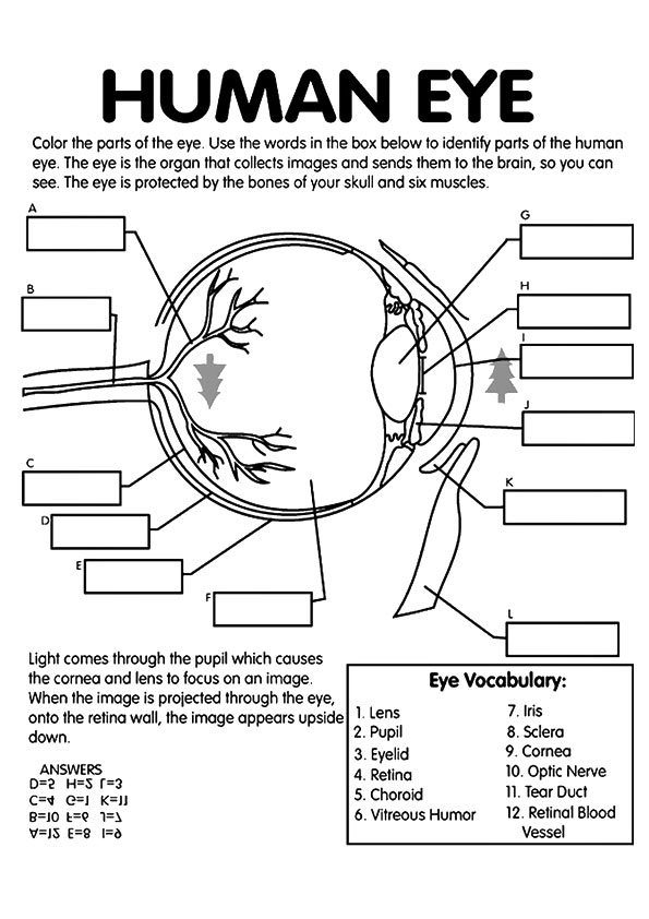 anatomy coloring page free anatomy coloring pages homeschool giveaways page anatomy coloring