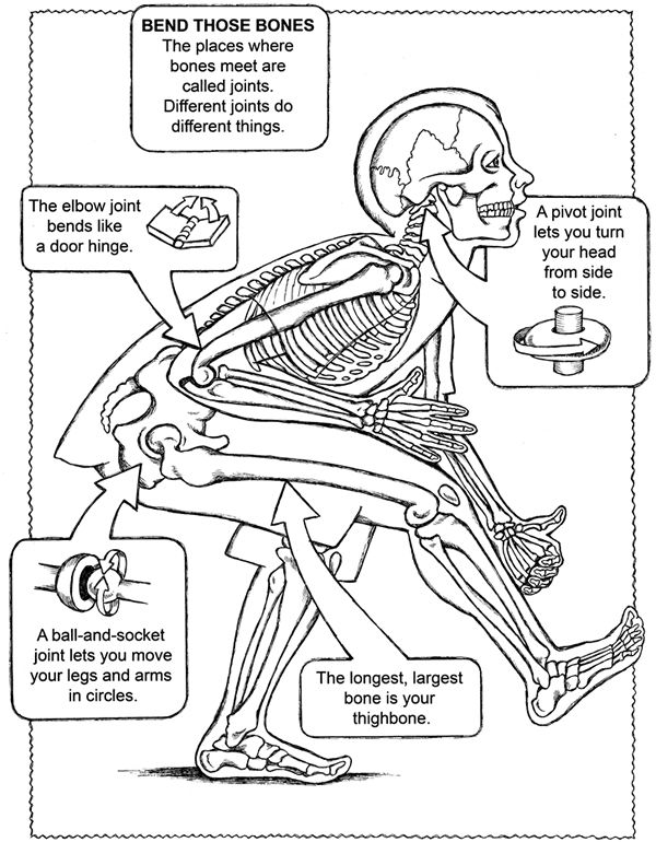 anatomy coloring page free coloring page from dover publications human body page anatomy coloring