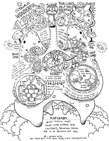 anatomy coloring page respiratory system coloring page biology anatomy anatomy coloring page