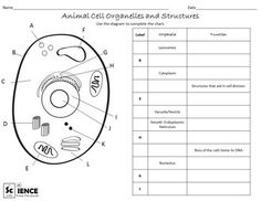 animal cell coloring biology junction animal biology coloring worksheet printable worksheets animal junction biology coloring cell