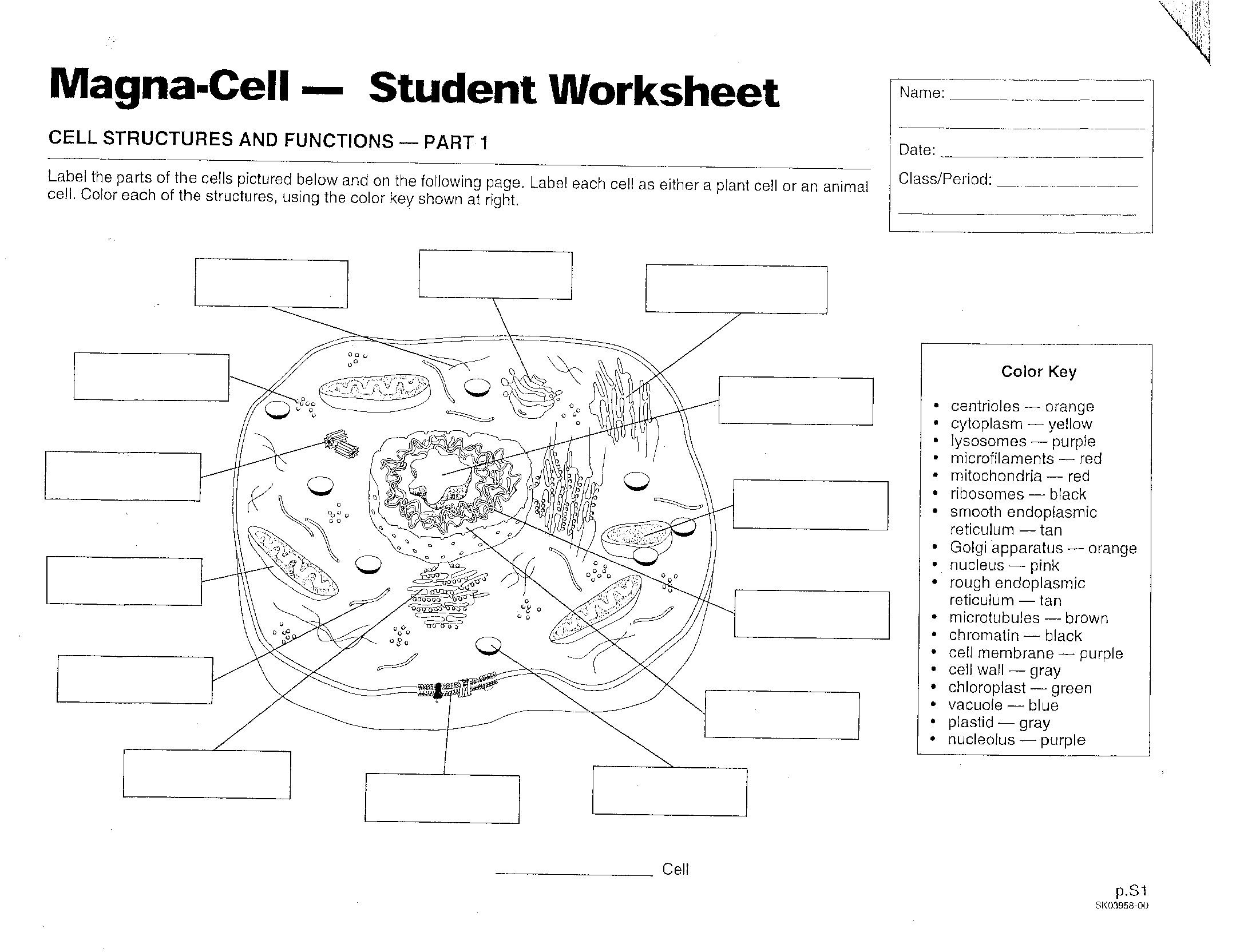 animal cell coloring biology junction animal biology coloring worksheet printable worksheets cell coloring biology junction animal