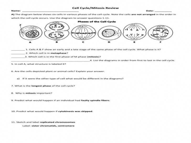 animal cell coloring biology junction cell cycle and mitosis worksheet answers animal coloring junction biology cell