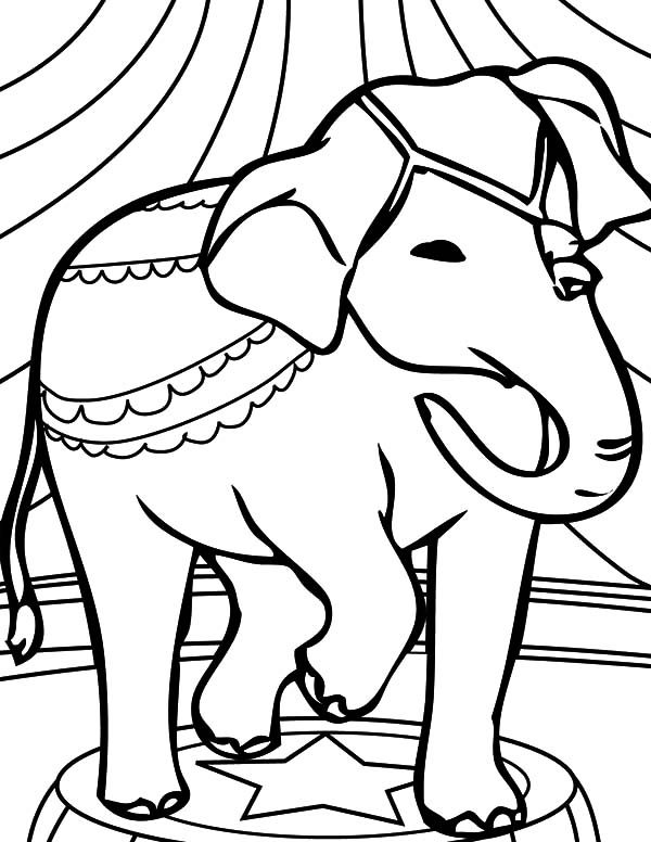 animal coloring pages elephant circus elephant coloring pages ideas to kids animal elephant coloring pages