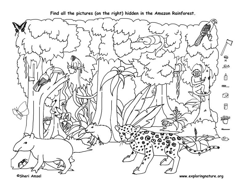 animal coloring pages online games find the things hidden in the amazon rainforest then games pages online coloring animal